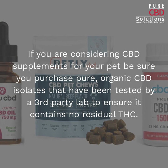 CBD Dosage for Your Dog_Topic One