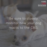 CBD Dosage for Your Dog_Topic Four