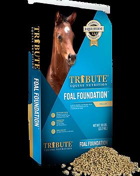 foal fondation web_0.png