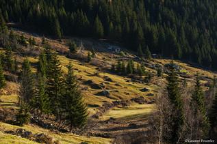 Alpes (prairie).JPG