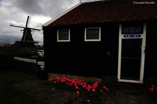 Amsterdam (moulin, maison & tulipes).JPG