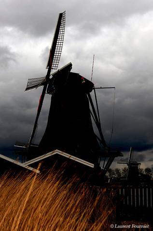Amsterdam (moulin & ajoncs).JPG