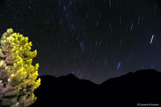 Corsica forêt de Bonifato (filé d'étoile
