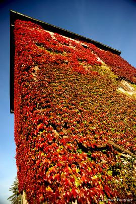 BEZAK Tour Montmart en automne.JPG