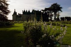 Chaumont sur Loire (contre jour).JPG