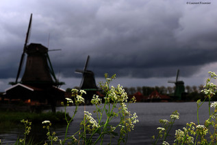 Amsterdam (moulins & carottes sauvages).