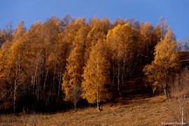 Alpes (boulots d'automne).JPG