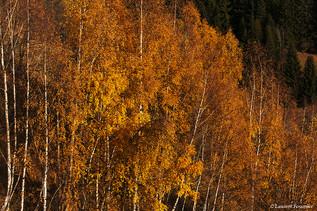 Alpes (couleurs d'automne).JPG