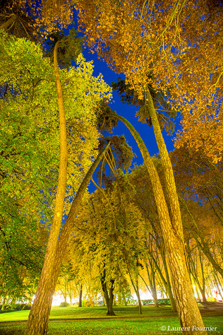 BEZAK palmiers de Chamars.JPG