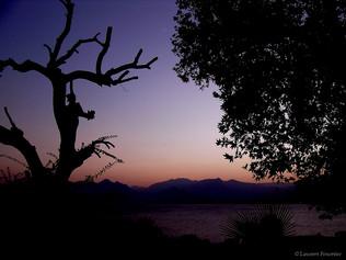 Antalya, arbre du pendu_TK.JPG