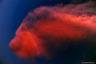 Corsica Bonifacio (poisson-rouge).jpg