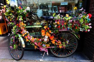 Amsterdam (bicyclette fleurie).JPG