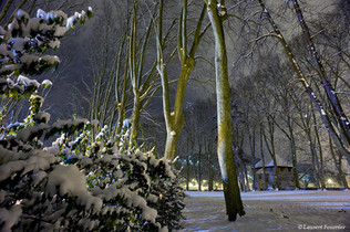 BEZAK Chamars sous la neige.JPG