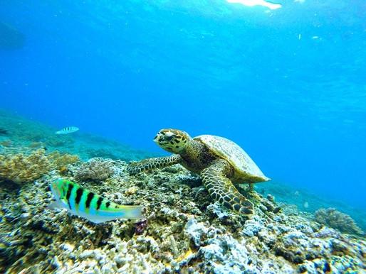 Meine push ups für Corona hangout - Tipp 6 Schwimmen mit Meeresschildkröten