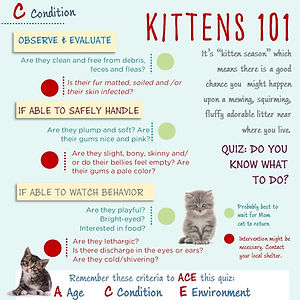 Kittens 101 Infographic- Condition.jpg
