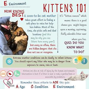 Kittens 101 Infographic- Env.jpg