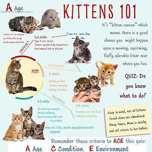 Kittens 101 Infographic.jpg