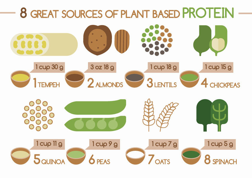 Top Plant-Based Proteins