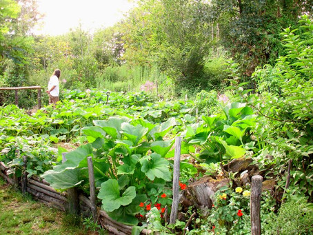 Happy International Permaculture Day