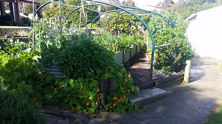 Permaculture garden with raised beds and shade structure