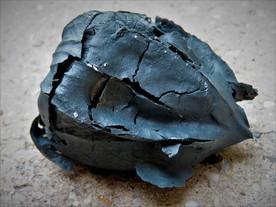 Végétaux Porcelaine Noire (18)