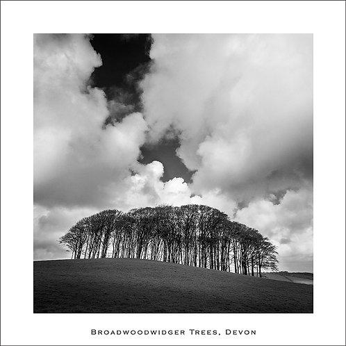 Broadwoodwidger Trees (Square)