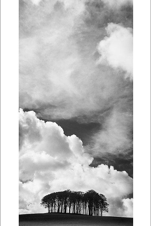 Broadwoodwidger Trees (Portrait)
