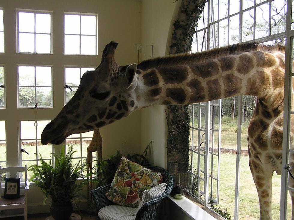 Africa_Africa-Giraffe.jpg