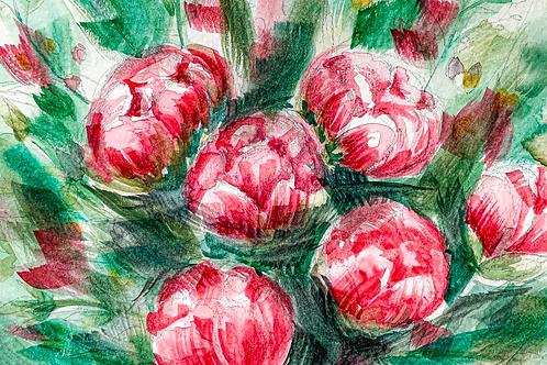 PEONIES (Watercolor Art Print)