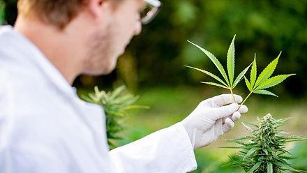 medcannabis.jpg
