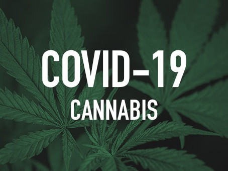 CBD & Cannabinoids Showing Protective Potential Effects Against COVID-19