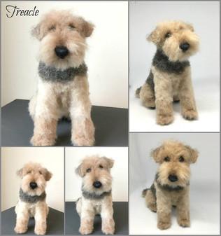 Fluffy Ted.jpg
