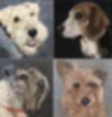 Wool Portraits.png