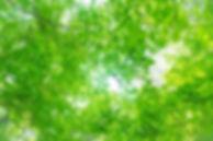 PAK86_komorebitohizashi_TP_V.jpg