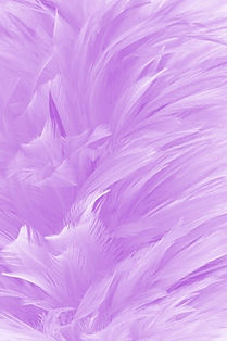 beautiful-light-purple-bird-feathers-tex