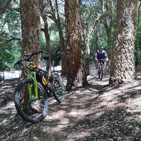 mountain biking in Cape Town forest