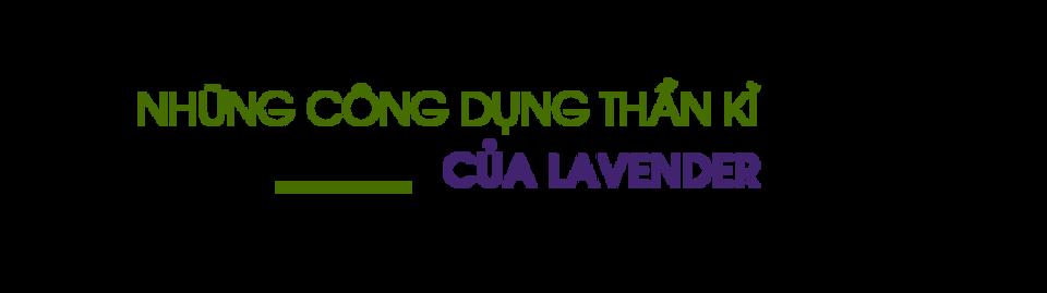 Nhung-cong-dung-than-ky-cua-lavender