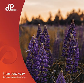Thumbnail - 6 lợi ích của hoa Lavender