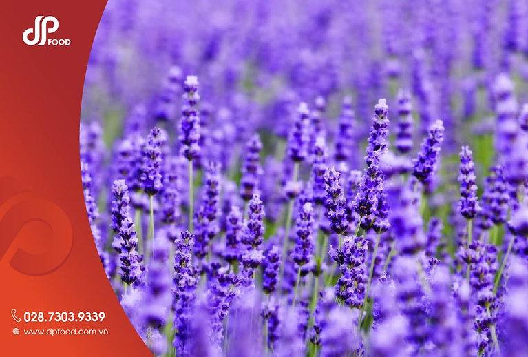 Hoa-lavender-duoc-dung-khi-nao