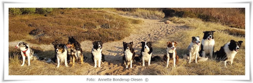 hundebillede101.jpg
