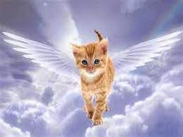 cat angel.jpg
