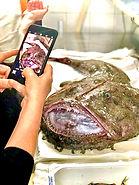 Rana Pescatrice vieste Pesce