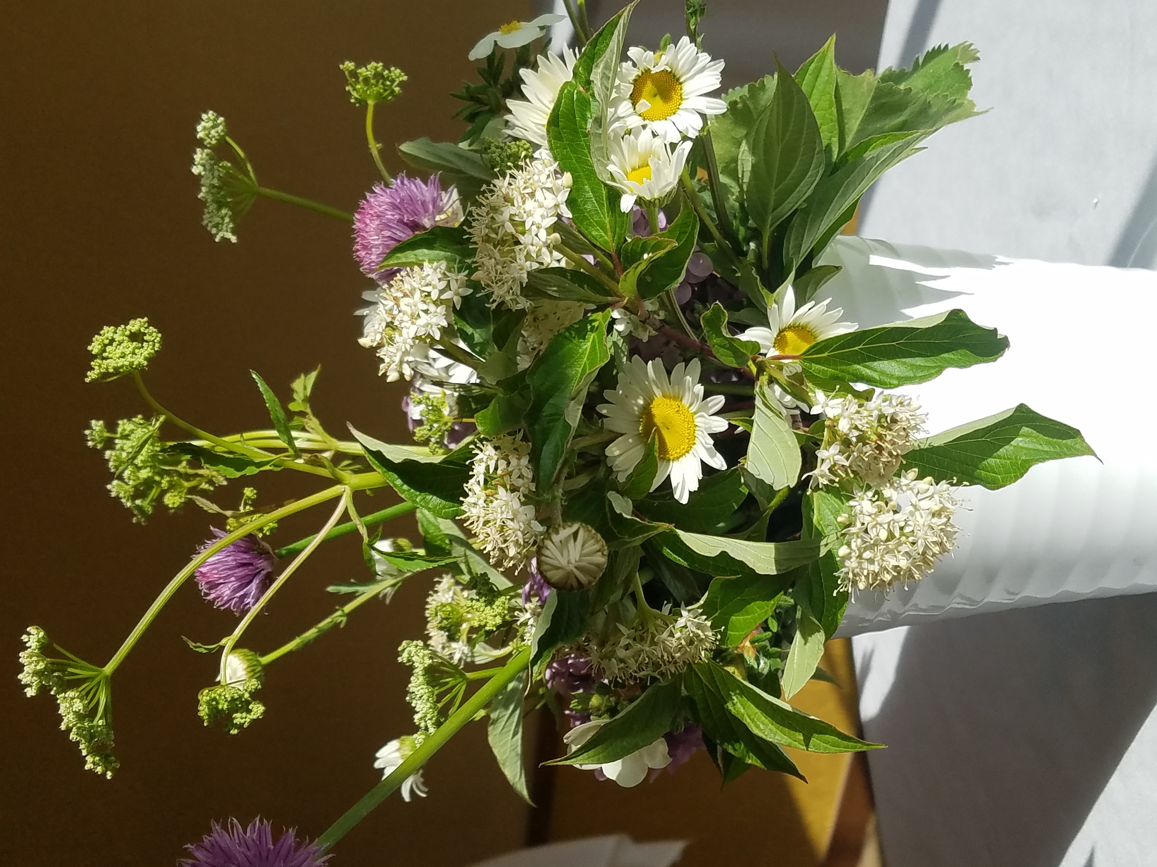 Wild flowers of Montana