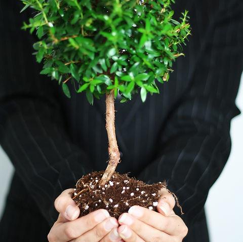 Der Coaching-Baum: Wurzeln bieten Sicherheit, der Stamm steht für Wachstum und in der Krone sind die Früchte zu finden