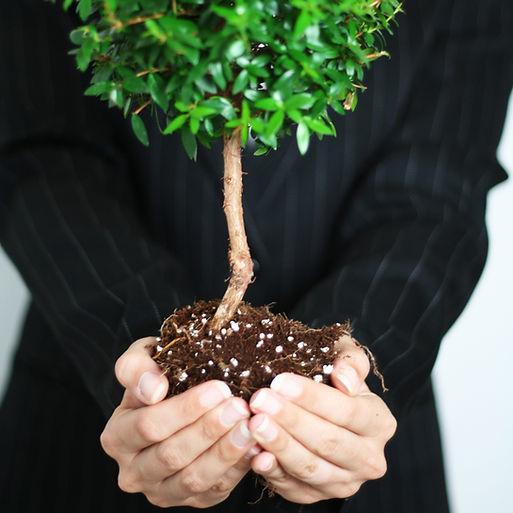 Zakelijke groei