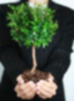 צמח צמיחה אישית