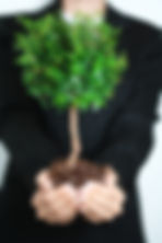 Fund manager nurturing young tree