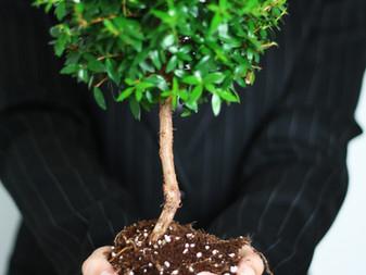 Buscador que planta árvores: ECOSIA