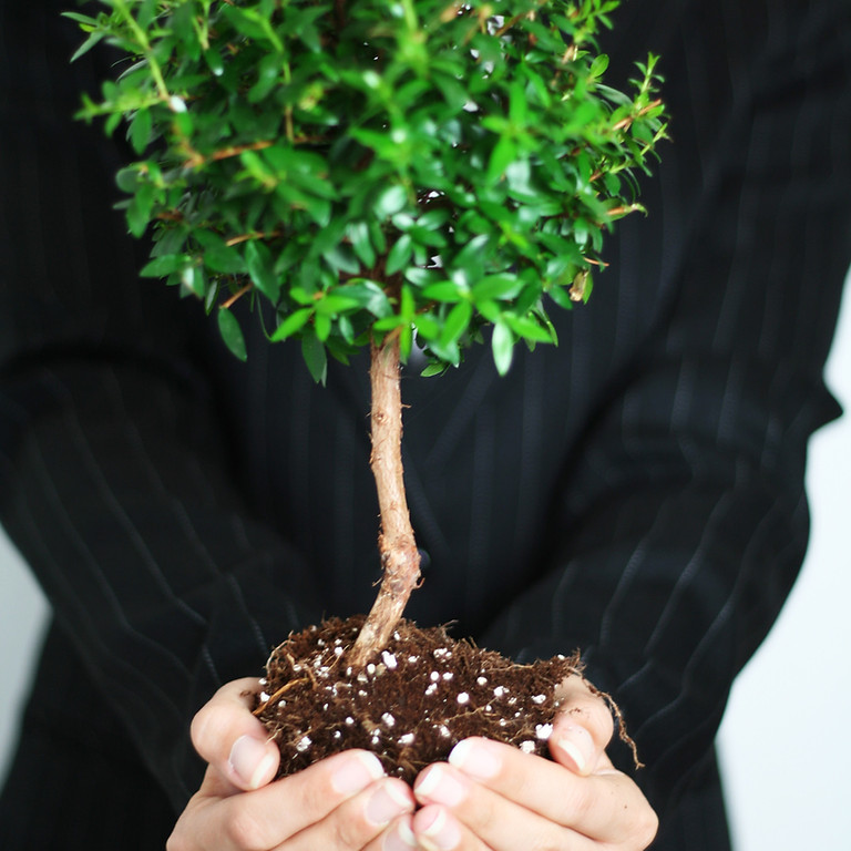 The Growth Minded Entrepreneur