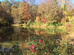 fall lake.jpg